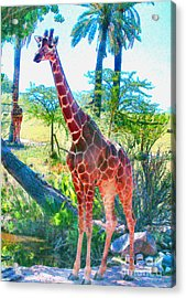 The Gentle Giraffe Acrylic Print