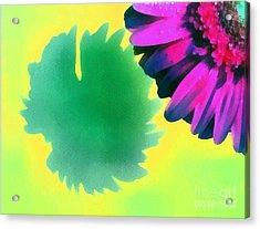 The Gerbera Acrylic Print by Odon Czintos