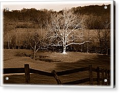 The Giant Of The Valley 2 Acrylic Print by Mark Fuller