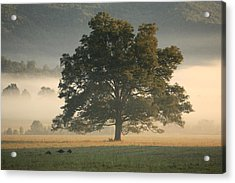 Acrylic Print featuring the photograph The Giving Tree by Doug McPherson