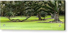The Giving Tree Acrylic Print by Scott Pellegrin
