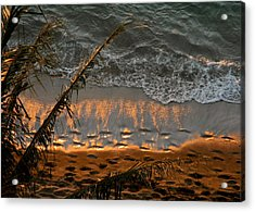 The Golden Moment IIi Acrylic Print by Kirsten Giving