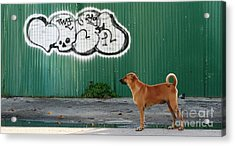 Acrylic Print featuring the photograph The Graffiti Artist by Nola Lee Kelsey