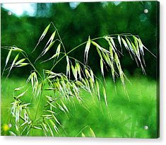 Acrylic Print featuring the photograph The Grass Seeds by Steve Taylor