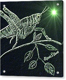 Acrylic Print featuring the drawing The Grasshopper by Maria Urso