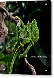 The Green Dude Acrylic Print by Dorothy Hilde