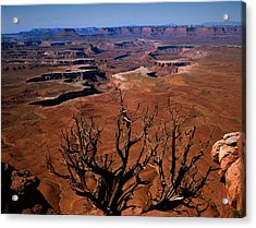 The Green River Over Look Canyonland National Park Acrylic Print by Daniel Chui