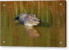 Acrylic Print featuring the photograph The Grin by Kathy Gibbons