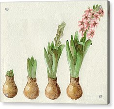 Acrylic Print featuring the painting The Growth Of A Hyacinth by Annemeet Hasidi- van der Leij
