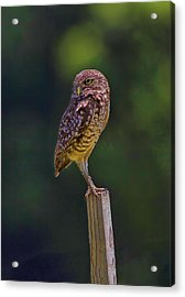 Acrylic Print featuring the photograph The Guardian by Anne Rodkin