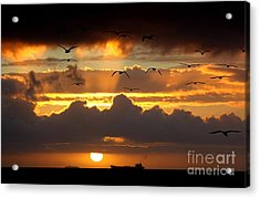 The Heavens Acrylic Print by Johanne Peale