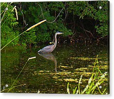 The Heron Acrylic Print