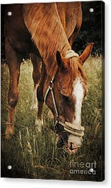 The Horse Acrylic Print by Angela Doelling AD DESIGN Photo and PhotoArt