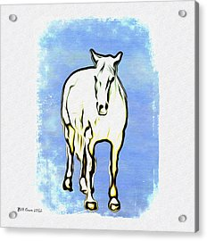The Horse Acrylic Print by Bill Cannon