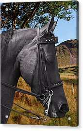 The Horse - God's Gift To Man Acrylic Print by Christine Till