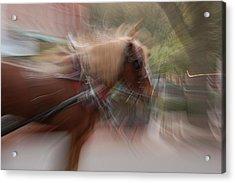 The Horse Acrylic Print by Randy J Heath