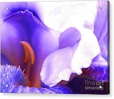 The Intimate Iris Acrylic Print by Jerome Stumphauzer