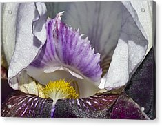Acrylic Print featuring the photograph The Iris by David Lester