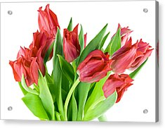 Acrylic Print featuring the photograph The Isolated First Spring Tulips Background by Aleksandr Volkov