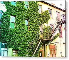 The Ivy And The Irony Acrylic Print by MJ Olsen