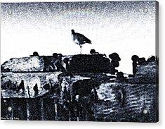 The Jetty Bird Acrylic Print by Ronald Talley