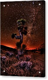 The Joshua Tree At Night Acrylic Print by Shane Lund
