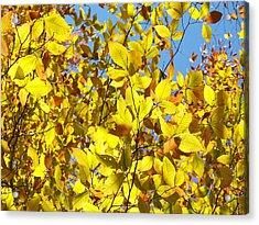 The Joy Of Autumn Acrylic Print
