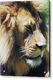 The King Acrylic Print by Todd Sherlock