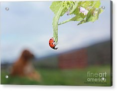 The Lady Bug No.1 Acrylic Print