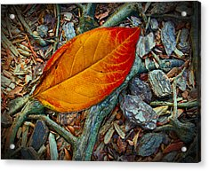 The Last Leaf Acrylic Print