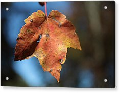 The Leaf Acrylic Print