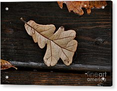 The Leaves Acrylic Print