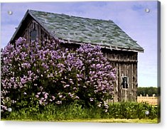 The Lilac Barn Acrylic Print by Cheryl Cencich