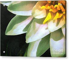 The Lily Flower Acrylic Print by Odon Czintos