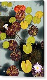 The Lily Pond Acrylic Print by James Mancini Heath