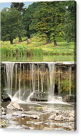 The Lin Acrylic Print by Linsey Williams
