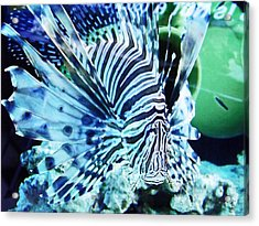 The Lionfish 1 Acrylic Print by Robin Hewitt