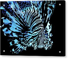The Lionfish 2 Acrylic Print by Robin Hewitt