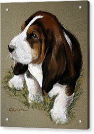 The Little Basset Acrylic Print by Mary Sparrow