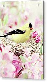 The Little Finch Acrylic Print by Stephanie Frey