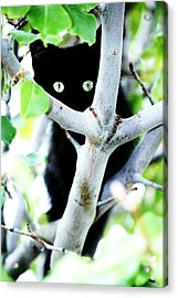 Acrylic Print featuring the photograph The Little Huntress by Jessica Shelton