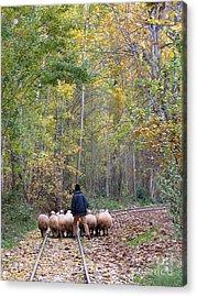 The Little Shepherd Acrylic Print by Issam Hajjar