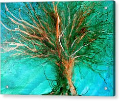 The Lone Tree Acrylic Print by Heather Matthews