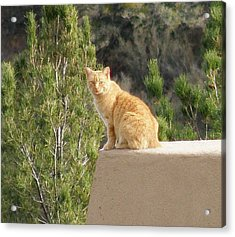The Lookout Acrylic Print by FeVa  Fotos