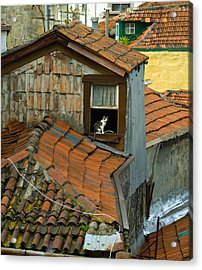 The Lord Of The Roofs Acrylic Print by Dias Dos Reis