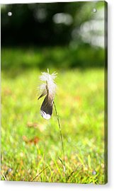 The Lost Feather Acrylic Print