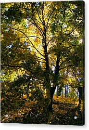 The Luminous Tree Acrylic Print by Mimulux patricia no No