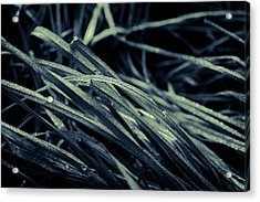 The Lying Grass Acrylic Print by Andreas Levi