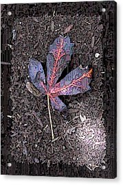 The Maple 5 Acrylic Print by Tim Allen