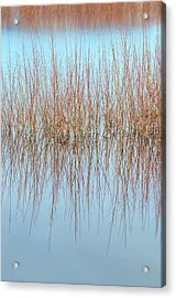 The Marsh Mirror Acrylic Print by Loree Johnson